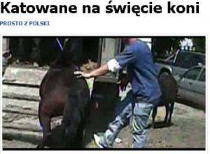 tvnpajeczno