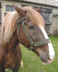 Uratowano od śmierci trzynaście koni – nadal walczymy o ich życie!