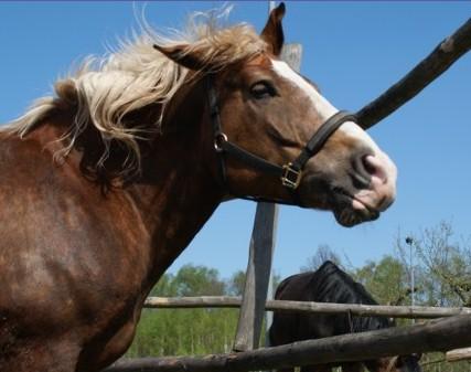 """Powrót """"Konia miesiąca"""" – Ofilia koniem czerwca"""