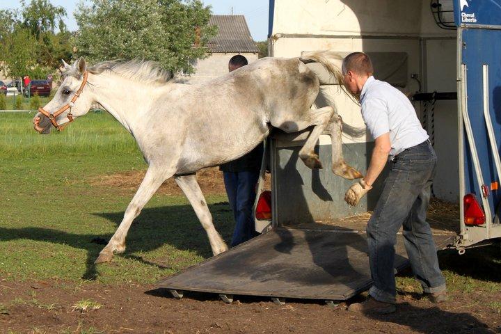 Ostatnie pięć klaczy opuściło hodowlę w Cholewach!