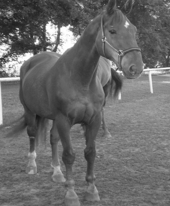 Odszedł od nas wspaniały koń i wierny przyjaciel – Kamieniec