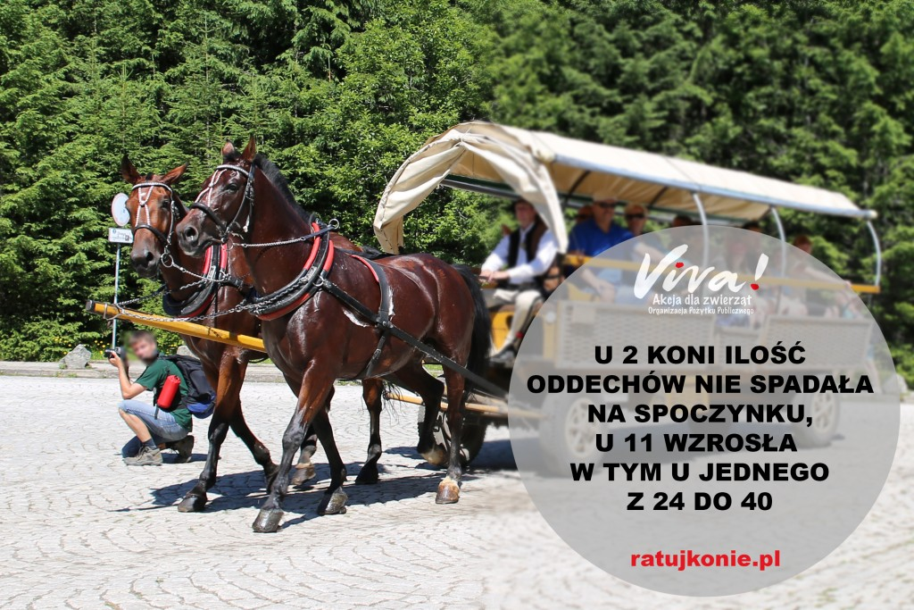 konie_morskie_oko_13