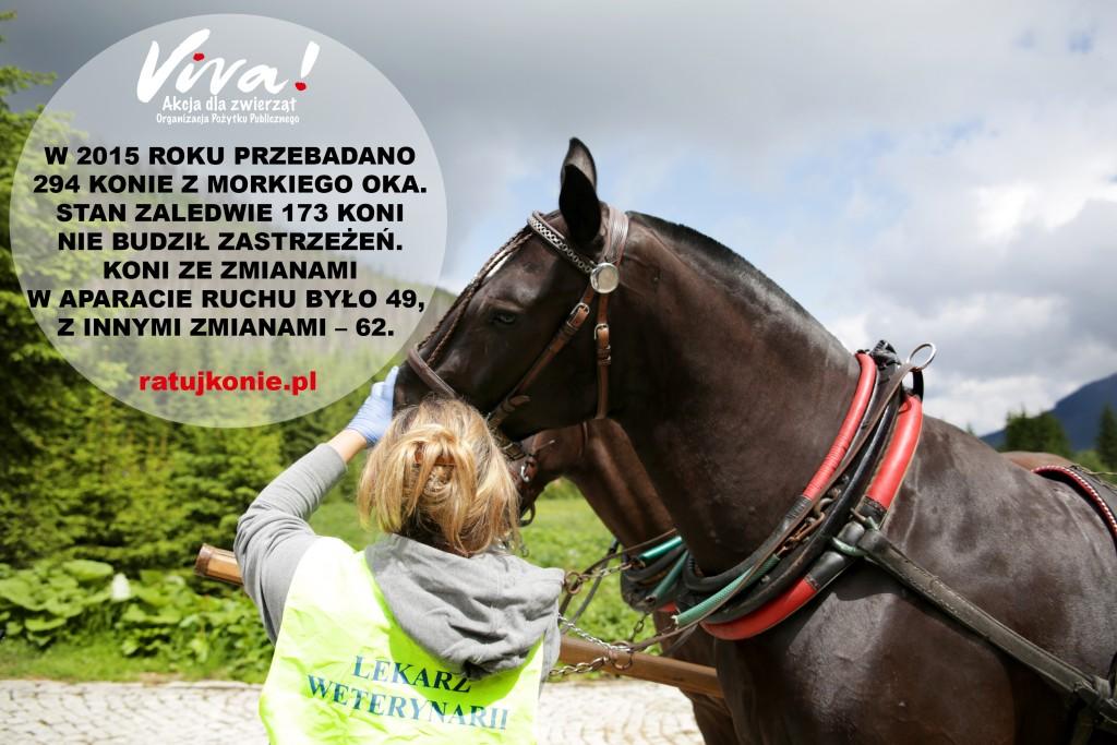 konie_morskie_oko_2