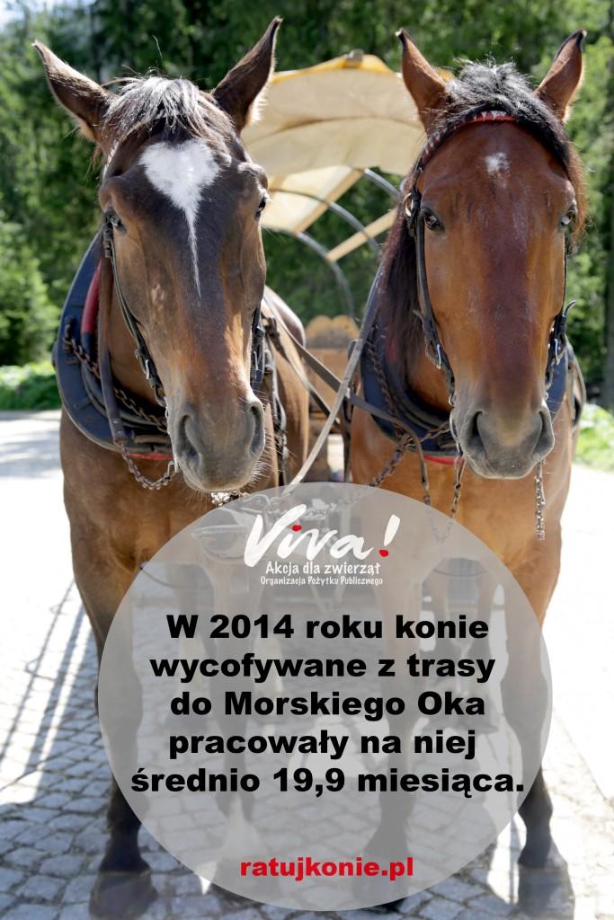 konie_morskie_oko_5