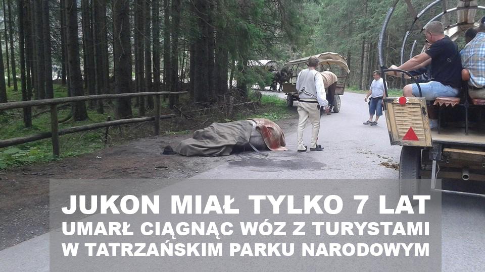 zdjecia_jukon_z_napisem
