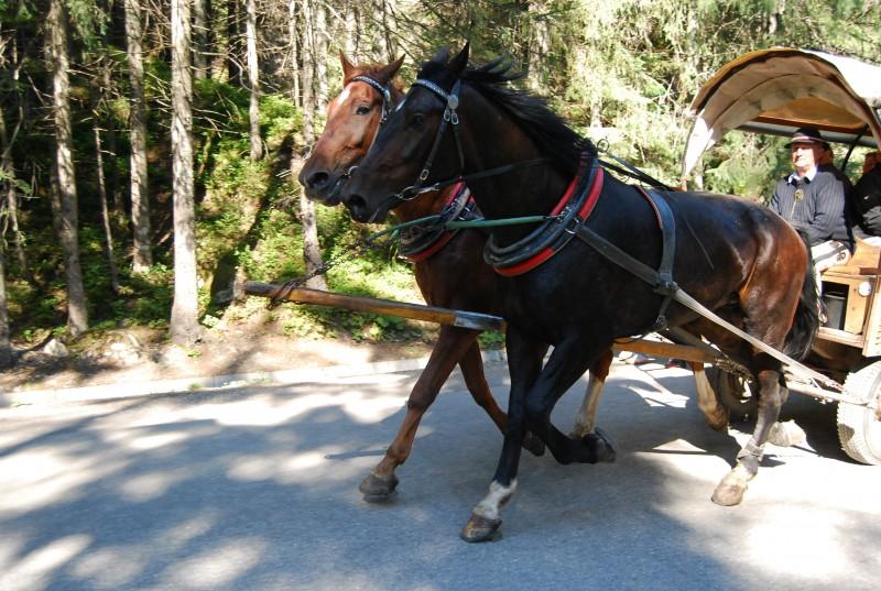 List od turystki do Dyrekcji Tatrzańskiego Parku Narodowego