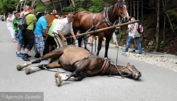 Ważne! Akcja dla koni z Morskiego Oka!