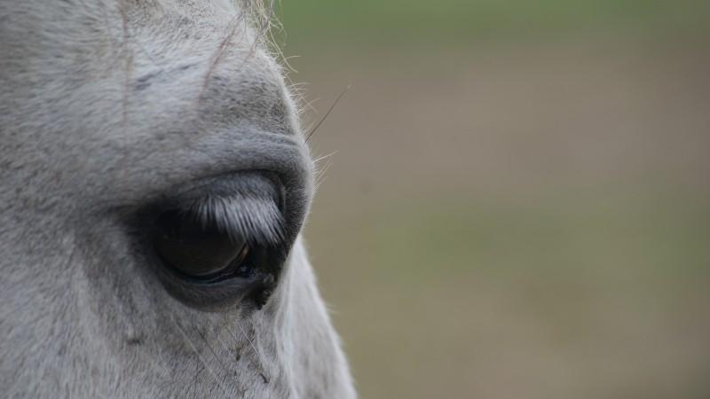 Dziś dzień konia :)