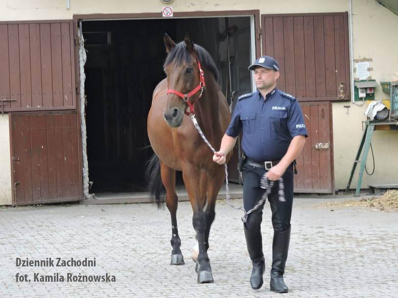 Policyjny koń idzie na prawdziwą emeryturę.