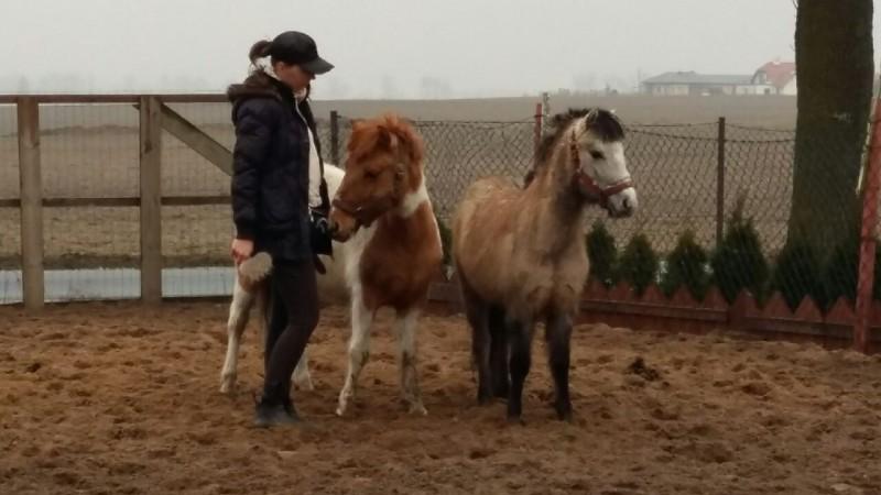 Tosia i Łatka pojechały do nowych domów adopcyjnych.