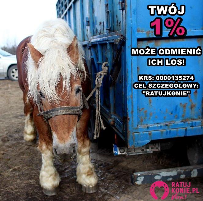 Dzięki Wam w 2016 roku uratowaliśmy przed rzeźnią 38 koni i 2 osiołki!