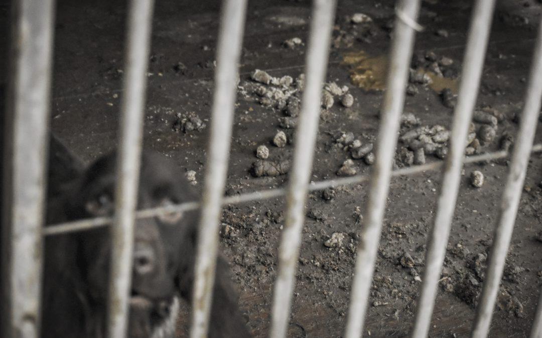 Interwencja w Parku Dzikich Zwierząt w Kadzidłowie!