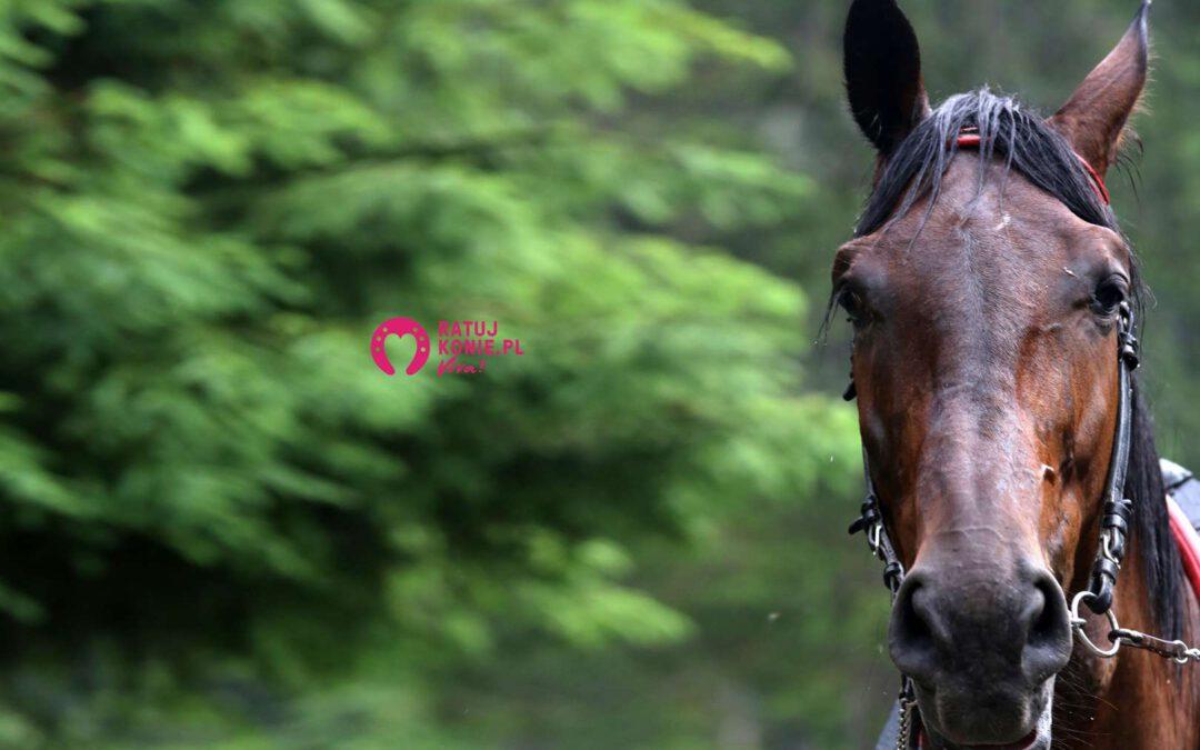BIEGŁY SĄDOWY PRZYZNAJE: Ekspert Tatrzańskiego Parku Narodowego źle obliczył przeciążenia koni