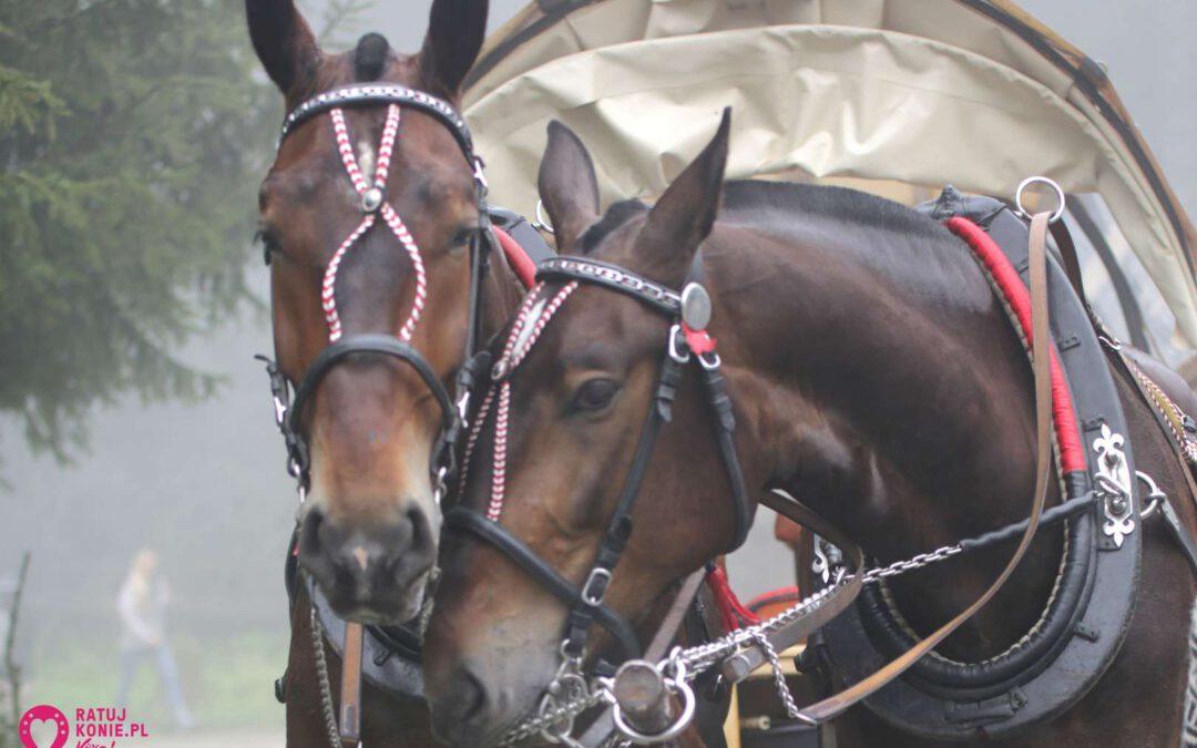 2 fiakrów oskarżonych o znęcanie nad końmi