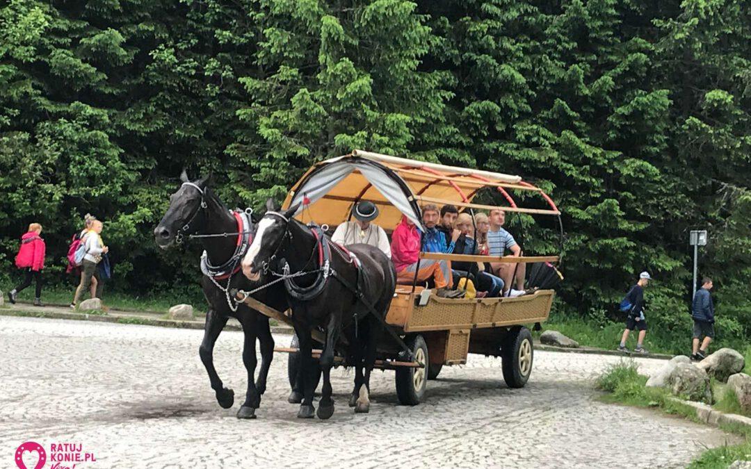 Konie wróciły na trasę do Morskiego Oka