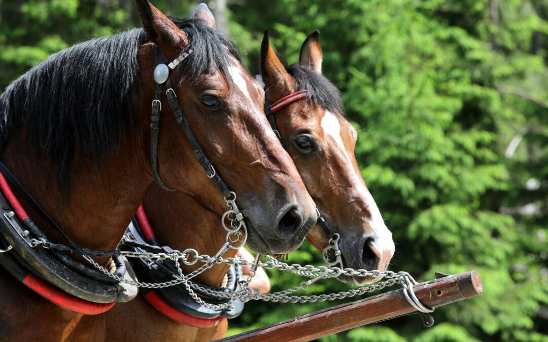 Obrońcy praw koni nie szkalowali furmanów z Morskiego Oka