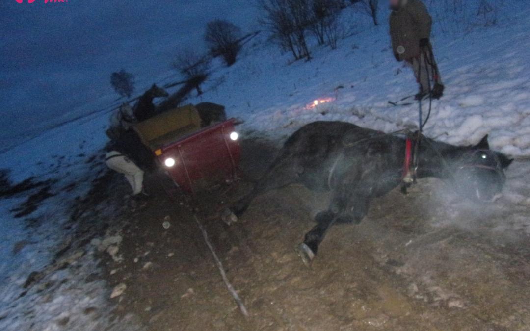 Kulig bez śniegu w Zakopanem –kolejny koń padł ofiarą chęci zysku?