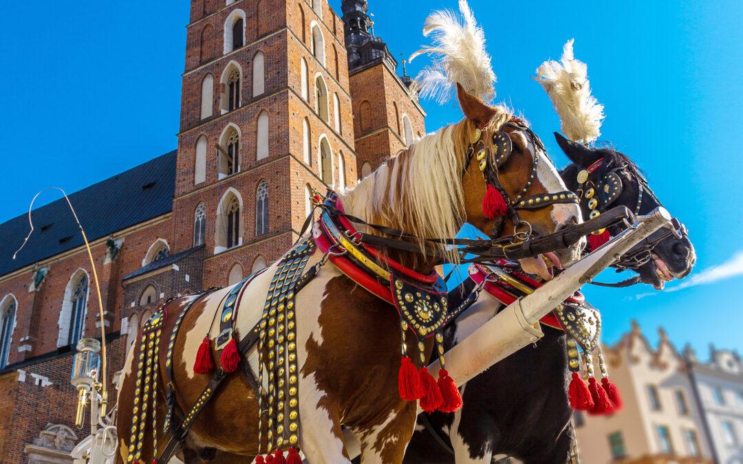 Chcemy zakazu pracy koni w upały w Krakowie