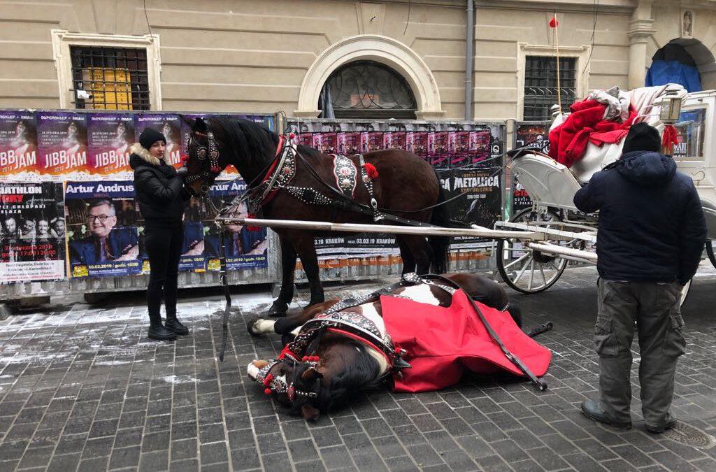 Pierwsze w historii zarzuty za znęcanie siękoniem dorożkarskim w Krakowie
