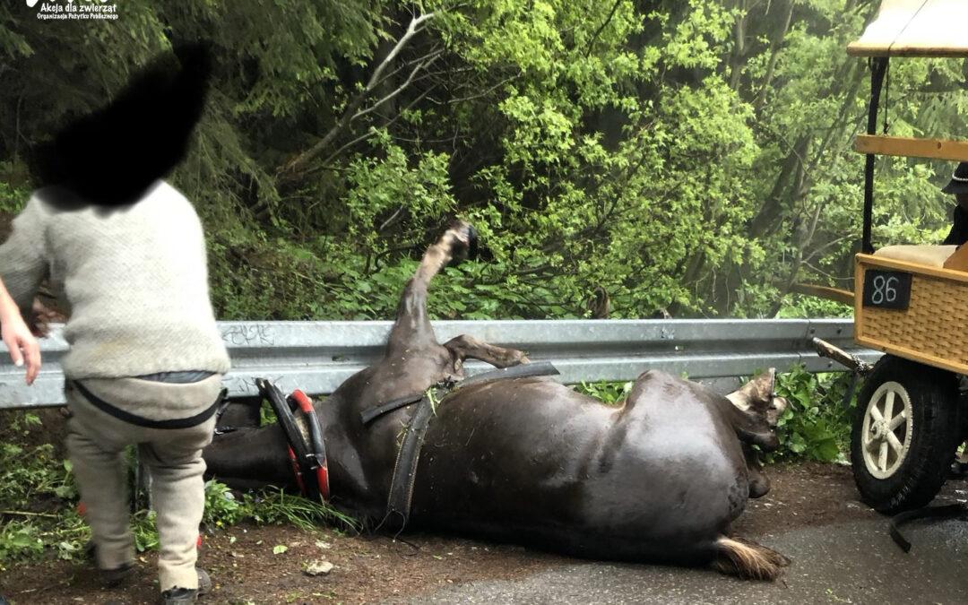 Tragiczny wypadek konia na trasie do Morskiego Oka