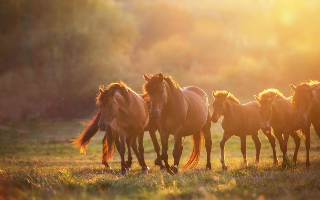 Chcemy zakazu zabijania koni na mięso!