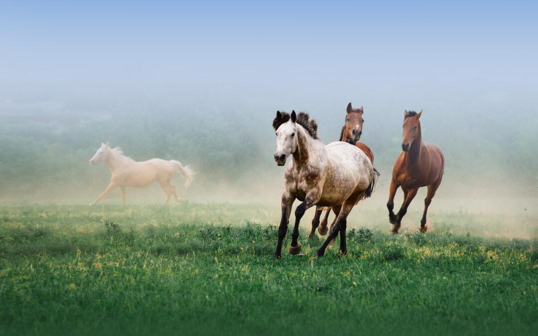 Dlaczego nie jada się koni?